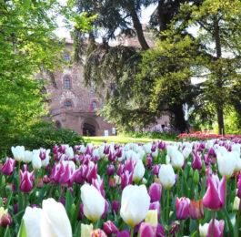 """""""Messer Tulipano"""" - Castello di Pralormo"""