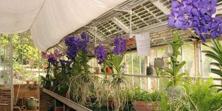 Immagine presa da turinista.com